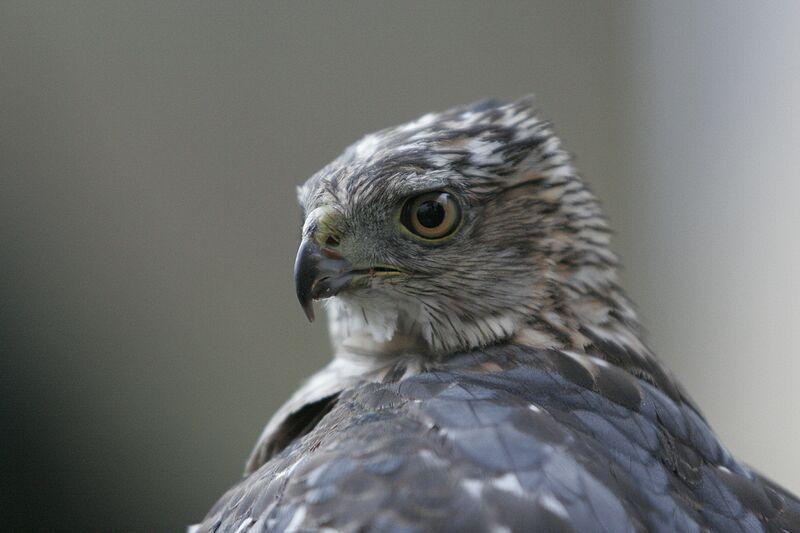 Flint Creek Wildlife Rehabilitation