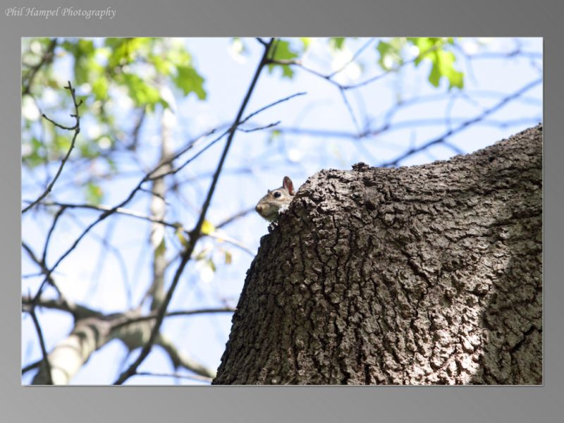 squirrel_mom-24_std__large