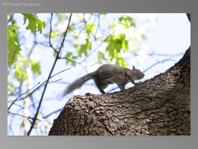 squirrel_mom-26_std__large